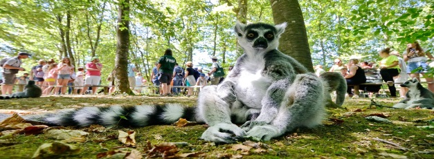 Vallee des singes Pays du Futuroscope
